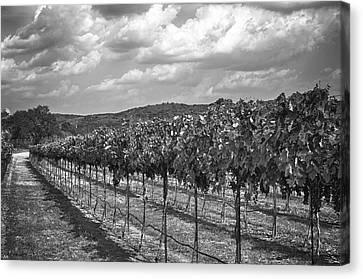 The Vineyard Canvas Print by Kristina Deane