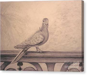 The Visitor Canvas Print by Sara Antonino