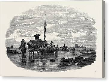 The Vraic Or Seaweed Harvest Guernsey Carting The Vraic Canvas Print