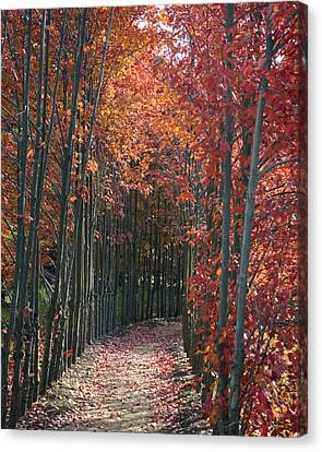 The Wall Of Trees Canvas Print by Robert Culver