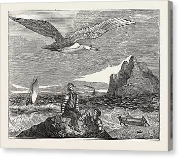 The Wandering Albatross Canvas Print by Litz Collection