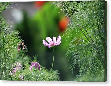 Canvas Print featuring the photograph The Warmth Of Summer by Thomas Woolworth