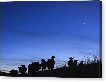Canvas Print featuring the photograph The Watchers by Scott Bean