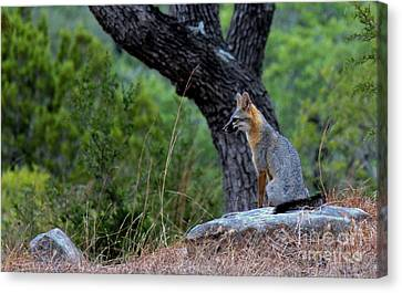 The Watchful Fox Canvas Print