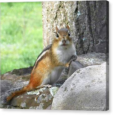 Canvas Print - The Watching Chipmunk Reclines by Patricia Keller