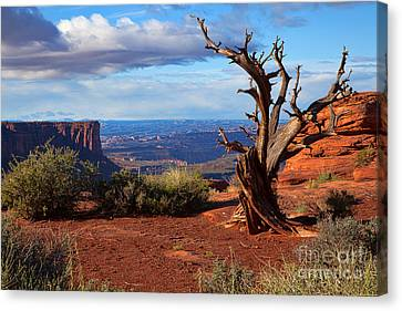 The Watchman Canvas Print by Jim Garrison