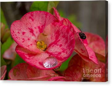 The  Water Drop And The Fly Canvas Print by Hank Taylor