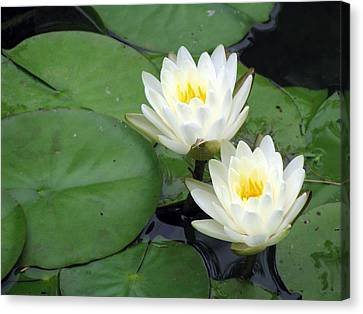 Canvas Print featuring the photograph The Water Lilies Collection - 06 by Pamela Critchlow