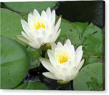 Canvas Print featuring the photograph The Water Lilies Collection - 08 by Pamela Critchlow
