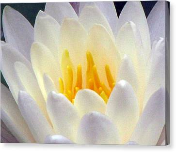 Canvas Print featuring the photograph The Water Lilies Collection - 11 by Pamela Critchlow