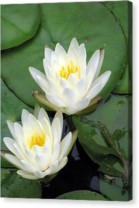 Canvas Print featuring the photograph The Water Lilies Collection - 12 by Pamela Critchlow