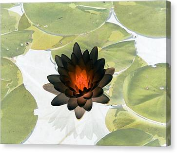 Canvas Print featuring the photograph The Water Lilies Collection - Photopower 1034 by Pamela Critchlow
