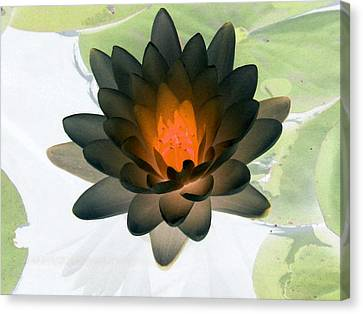 Canvas Print featuring the photograph The Water Lilies Collection - Photopower 1035 by Pamela Critchlow