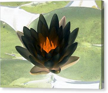 Canvas Print featuring the photograph The Water Lilies Collection - Photopower 1037 by Pamela Critchlow