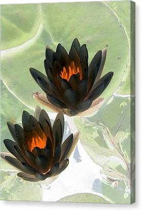 Canvas Print featuring the photograph The Water Lilies Collection - Photopower 1046 by Pamela Critchlow