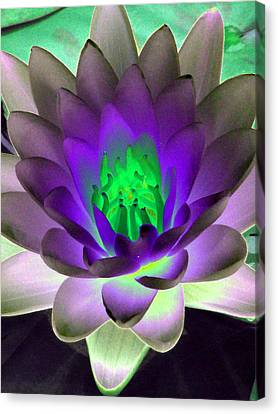 Canvas Print featuring the photograph The Water Lilies Collection - Photopower 1115 by Pamela Critchlow
