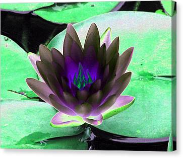 Canvas Print featuring the photograph The Water Lilies Collection - Photopower 1116 by Pamela Critchlow