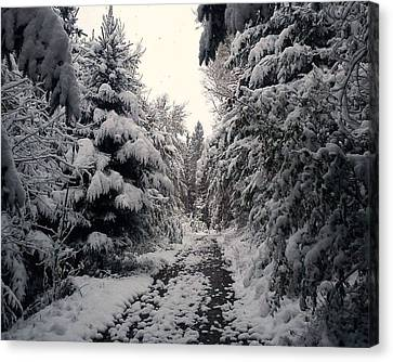 Canvas Print featuring the photograph The Way In Snow by Felicia Tica
