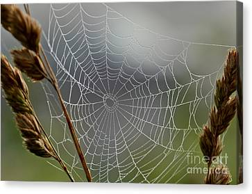 The Web Canvas Print by Kerri Farley