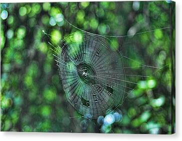 The Web Canvas Print by Rick Friedle