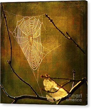 The Web We Weave Canvas Print by Darren Fisher