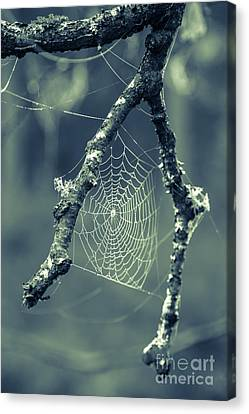The Webs We Weave Canvas Print by Edward Fielding