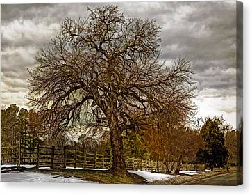 The Welcome Tree Canvas Print