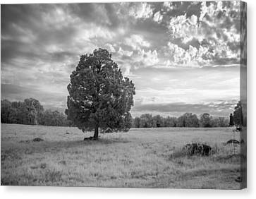 The Wheatfield 8d00091 Canvas Print by Guy Whiteley