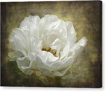 The White Peony Canvas Print by Barbara Orenya