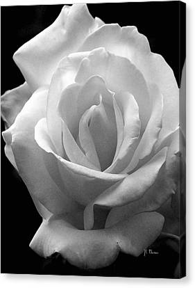 Canvas Print featuring the photograph The White Rose by James C Thomas