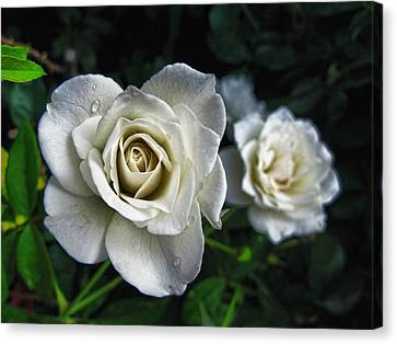 The White Rose Canvas Print by Oscar Alvarez Jr