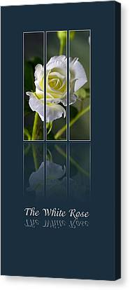 The White Rose Canvas Print by Sarah Christian