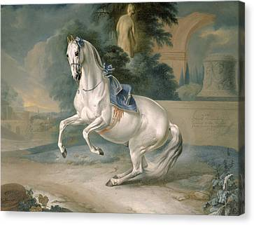 The White Stallion Leal En Levade Canvas Print