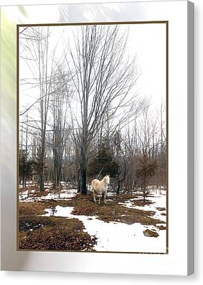 The White Stallion On A Snowless  Mound Canvas Print by Patricia Keller