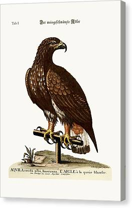 The White-tailed Eagle Canvas Print by Splendid Art Prints