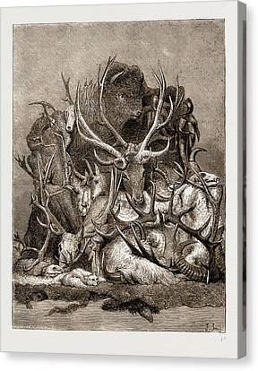 The Wild Game Of America, 1876 Canvas Print by Litz Collection