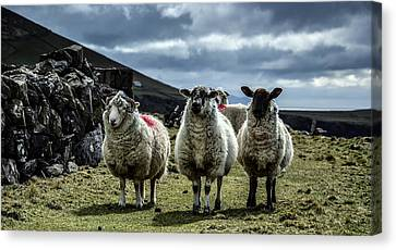 The Wise Ones Canvas Print by Florian Walsh