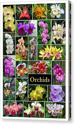 Canvas Print featuring the photograph The Wonderful World Of Orchids by Cindy McDaniel