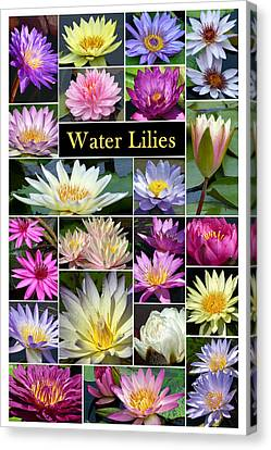 Canvas Print featuring the photograph The Wonderful World Of Water Lilies by Cindy McDaniel