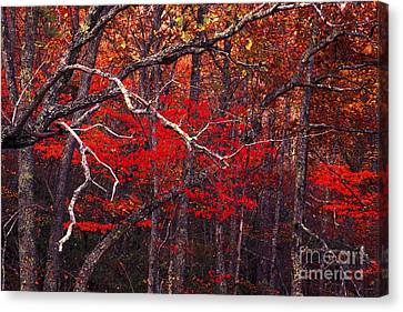 The Woods Aflame In Red Canvas Print by Paul W Faust -  Impressions of Light