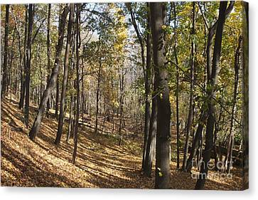 Canvas Print featuring the photograph The Woods by William Norton