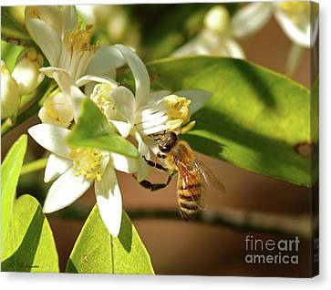 Colors Canvas Print - The Working Bee 01 by Arik Baltinester
