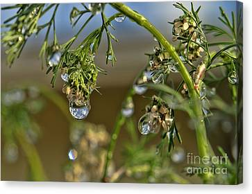 The World In A Drop Of Water Canvas Print by Peggy Hughes