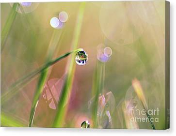 The World In A Drop Canvas Print by Sylvia Cook