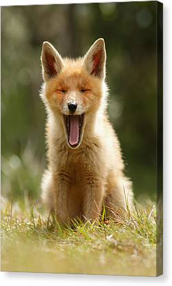 The Yawning Fox Kit Canvas Print by Roeselien Raimond