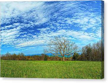 The Zen Meadow Canvas Print by Metro DC Photography