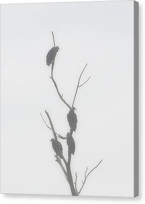 Their Waiting Four Black Vultures In Dead Tree Canvas Print by Chris Flees