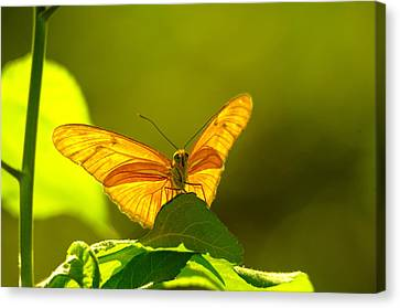 Then A Butterfly Canvas Print by Jeff Swan