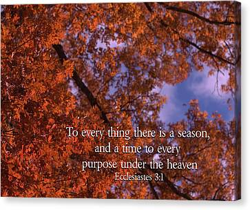 There Is A Season Ecclesiastes Canvas Print by Denise Beverly