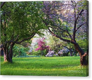 There Is No Place Like Spring Canvas Print by Judy Via-Wolff